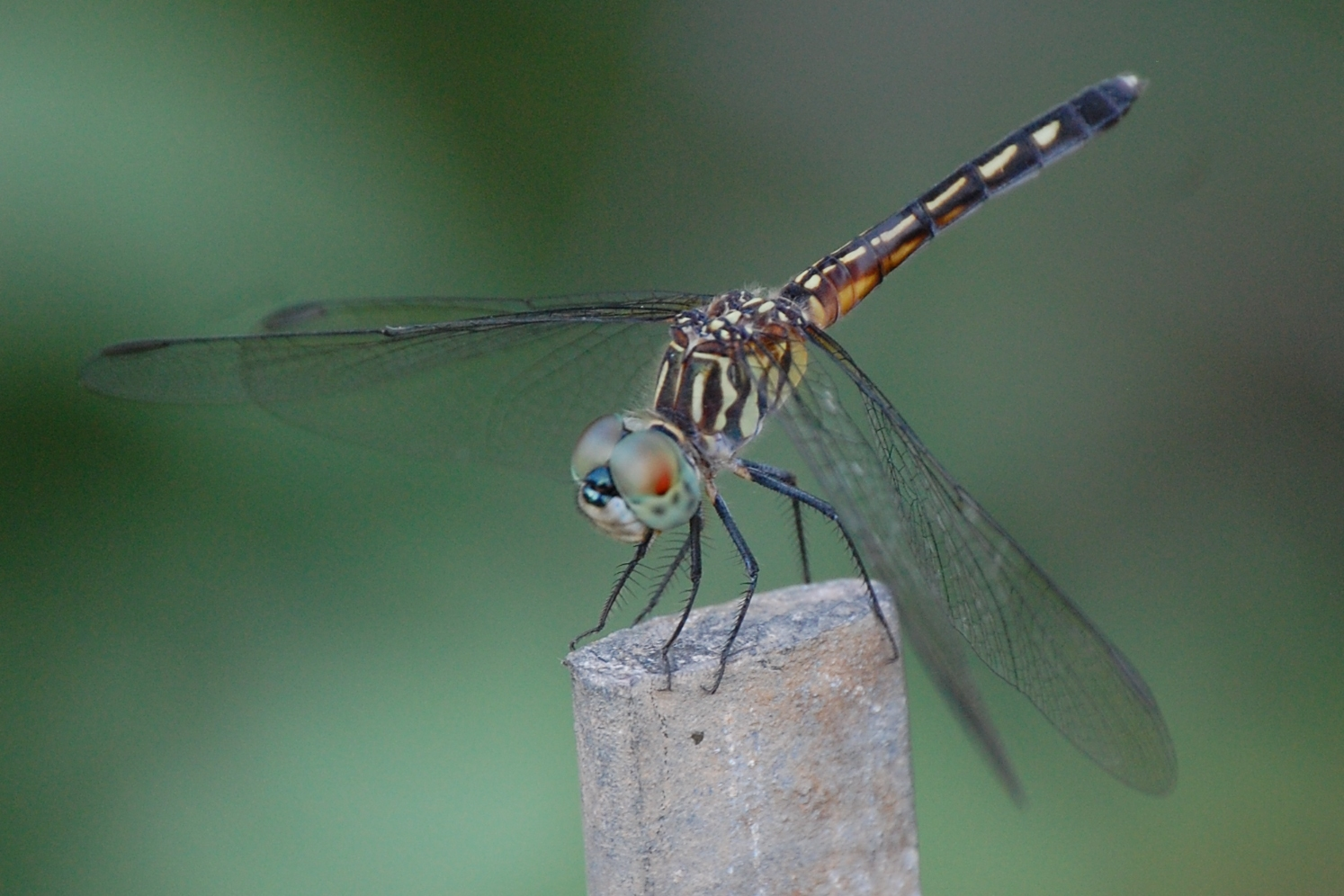 Resources, Google, and Dragonflies