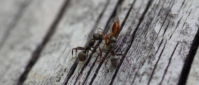 Ants https-::farm9.staticflickr.com:8440:7866197978_faa9ac1ee0_z
